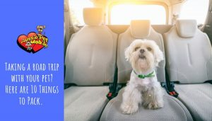 Taking a road trip with your pet Here are 10 Things to Pack