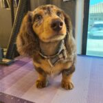 Groomed Pet (9)