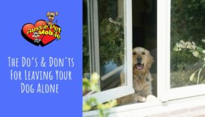 The Do's & Don'ts For Leaving Your Dog Alone-Aug-2021